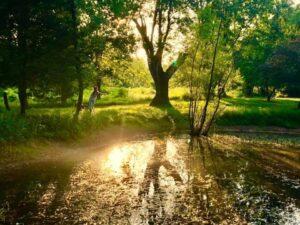 Creasey pond